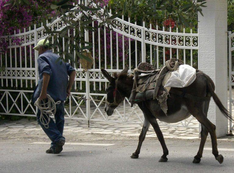 Γάιδαρος ανοίγει την πόρτα αποθήκης για να βρει το φαγητό του!   Newsit.gr