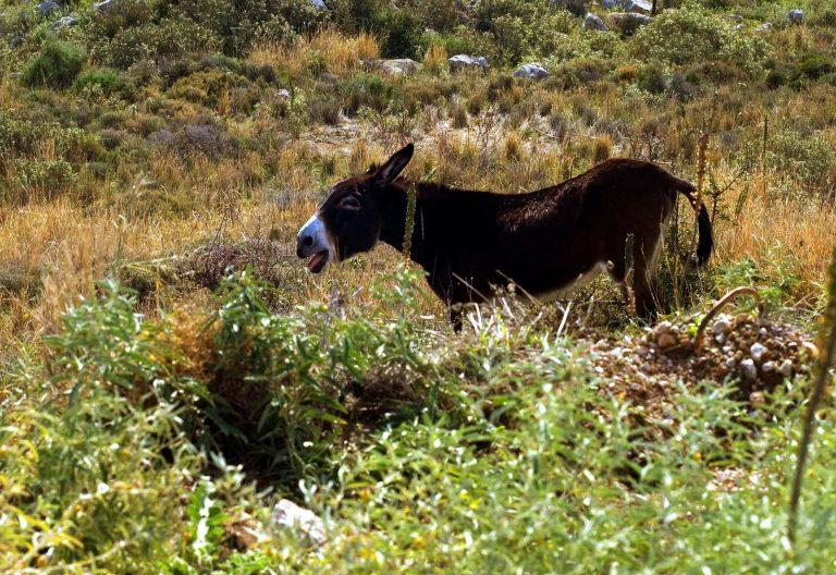 Τυρί από γάλα…γαϊδάρας! | Newsit.gr