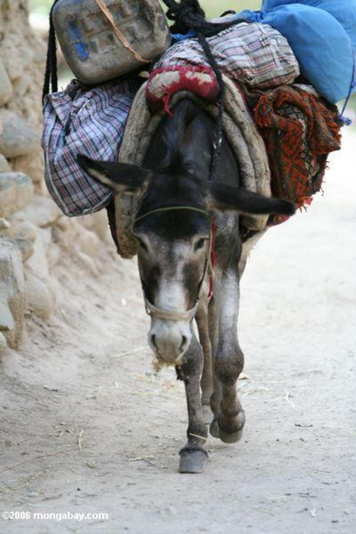 Γιάννενα: Γαϊδουράκια φορτωμένα με χασίς!   Newsit.gr