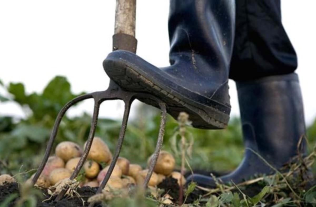 """3.500 """"κηπουροί"""" σε δήμο της Αττικής – Ειδικός ανακριτής για σπατάλη στους ΟΤΑ   Newsit.gr"""