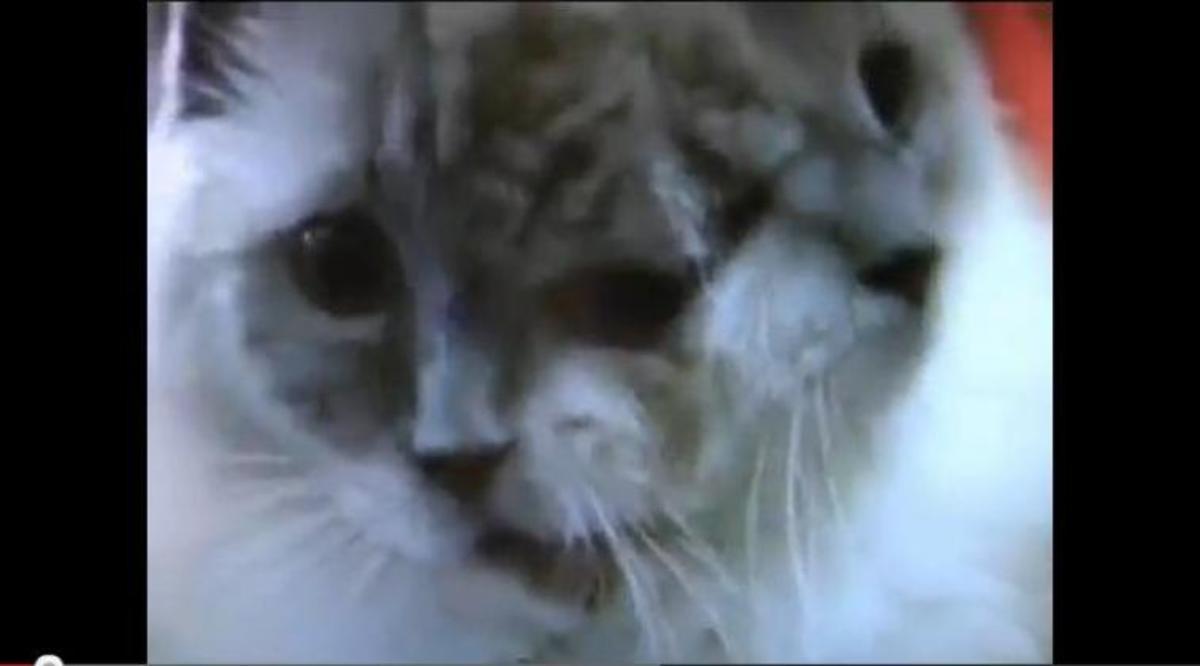 Πέθανε το γατάκι με τα δύο πρόσωπα…   Newsit.gr