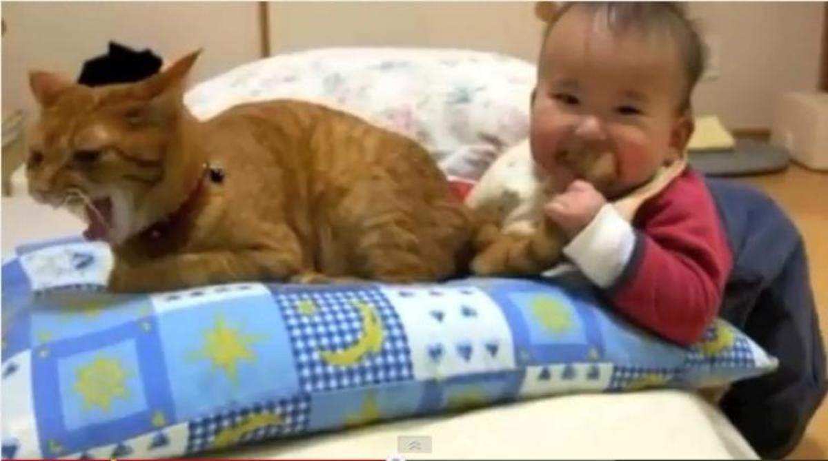 H πιο υπομονετική γάτα στον κόσμο! | Newsit.gr