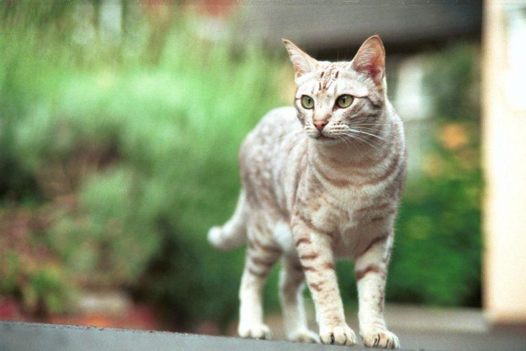 Ηράκλειο: Ανήλικοι σκότωσαν γάτα με αεροβόλο!   Newsit.gr