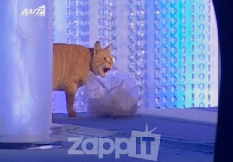 Η γάτα τρώει τα σουβλάκια του Κωστόπουλου!   Newsit.gr