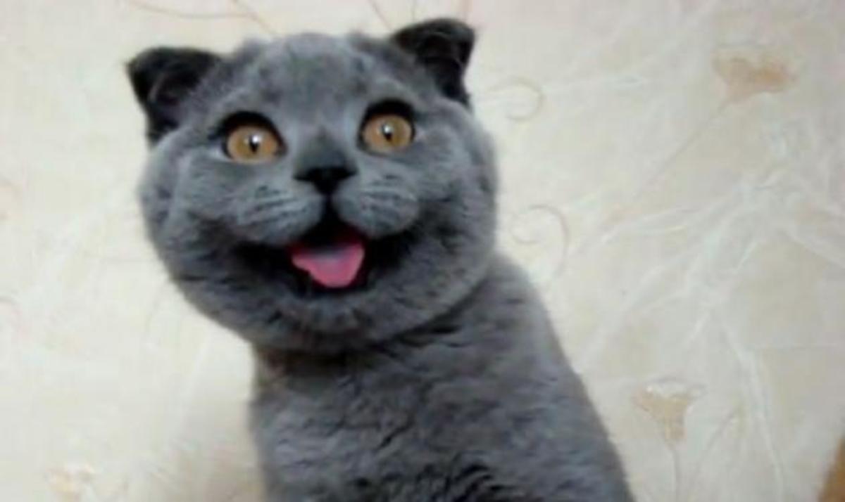 Αυτή είναι η πιο χαριτωμένη γάτα στον κόσμο! Και όχι δεν είναι ψεύτικη! Βίντεο | Newsit.gr