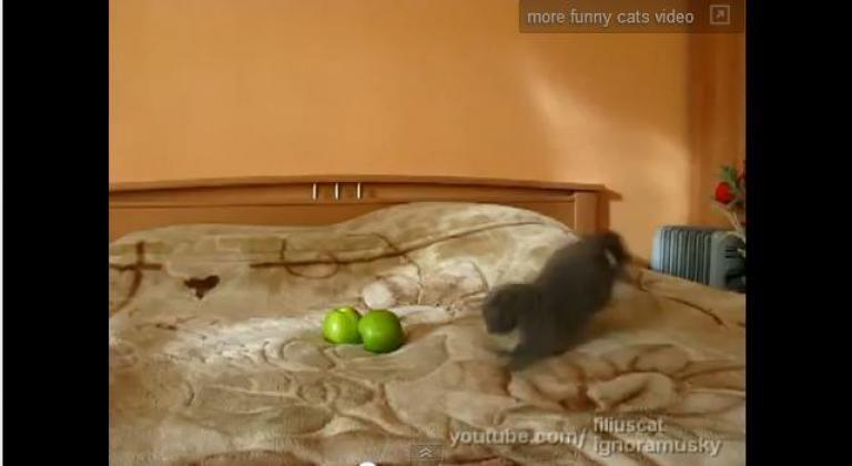 Απίστευτη γάτα επιτίθεται σε δύο…μήλα! | Newsit.gr