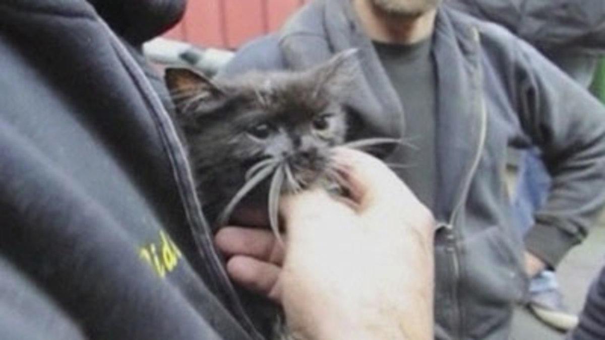 48ωρη μάχη για να απεγκλωβίσουν ένα γατάκι! (Video) | Newsit.gr