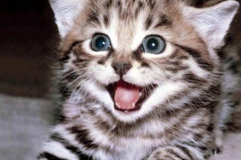 Δείτε τα δέκα πιο χαριτωμένα ζωάκια του πλανήτη!   Newsit.gr