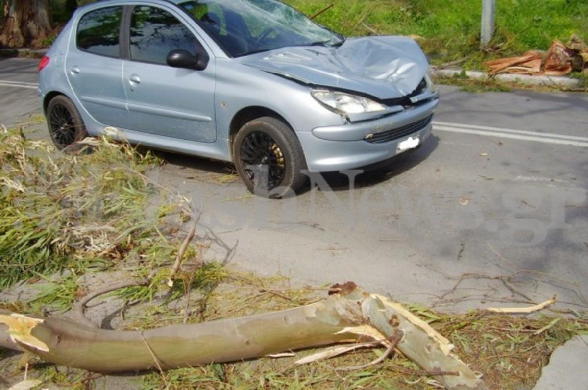 Χανιά: H κακοκαιρία ξερίζωσε δέντρα και έκοψε καλώδια της ΔΕΗ!   Newsit.gr