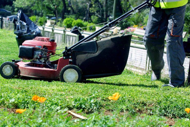 Ηλεία: Διαρρήκτες με έφεση στην… κηπουρική   Newsit.gr