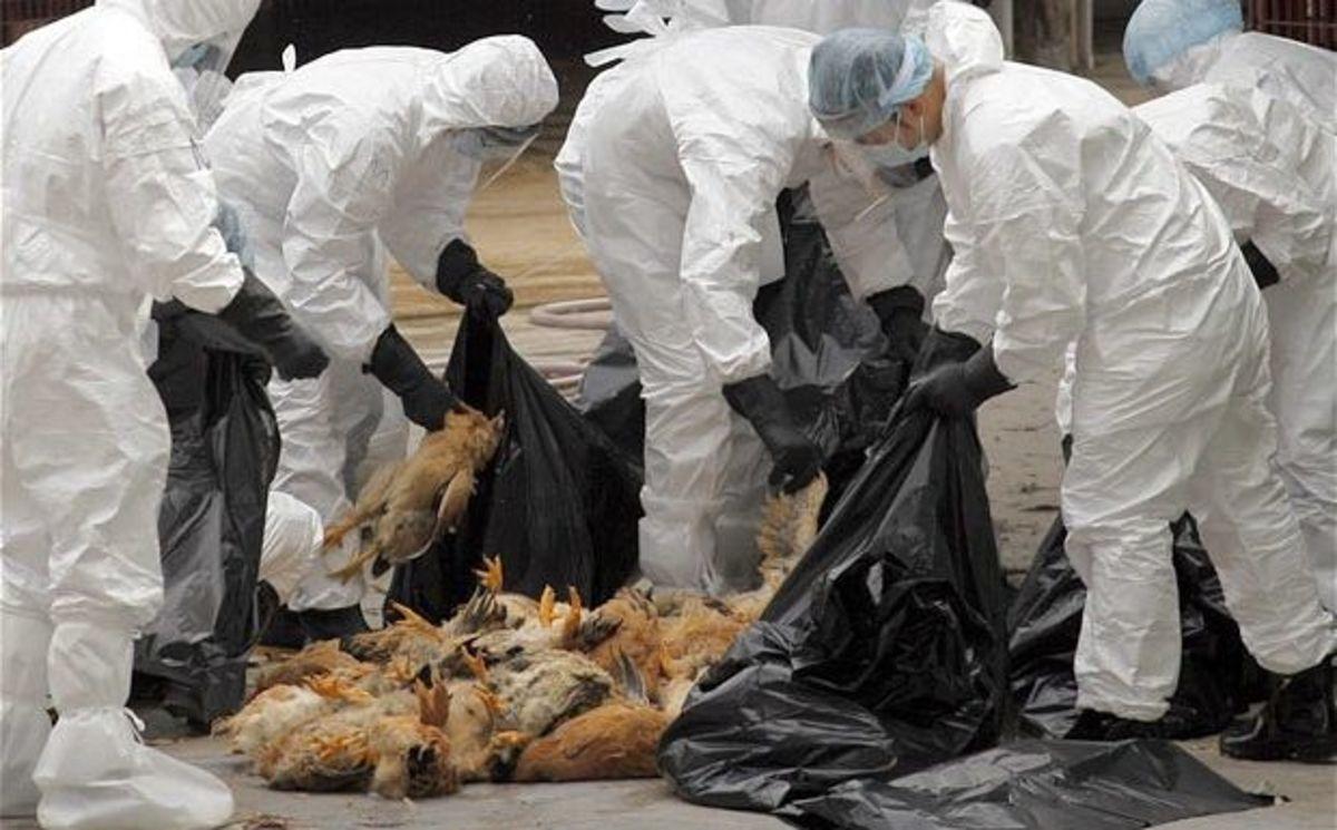 """Κίνδυνος για """"επιστροφή"""" της γρίπης των πτηνών, λόγω… κρίσης   Newsit.gr"""
