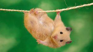 Ποντίκια… ζόμπι! Πώς οι επιστήμονες τα μετέτρεψαν σε φονικές μηχανές [vid]