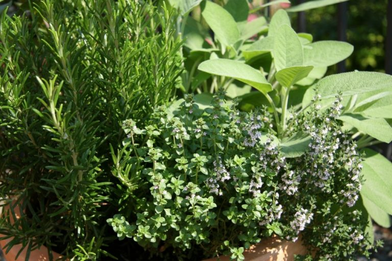 Τα βότανα που ρίχνουν την πίεση | Newsit.gr