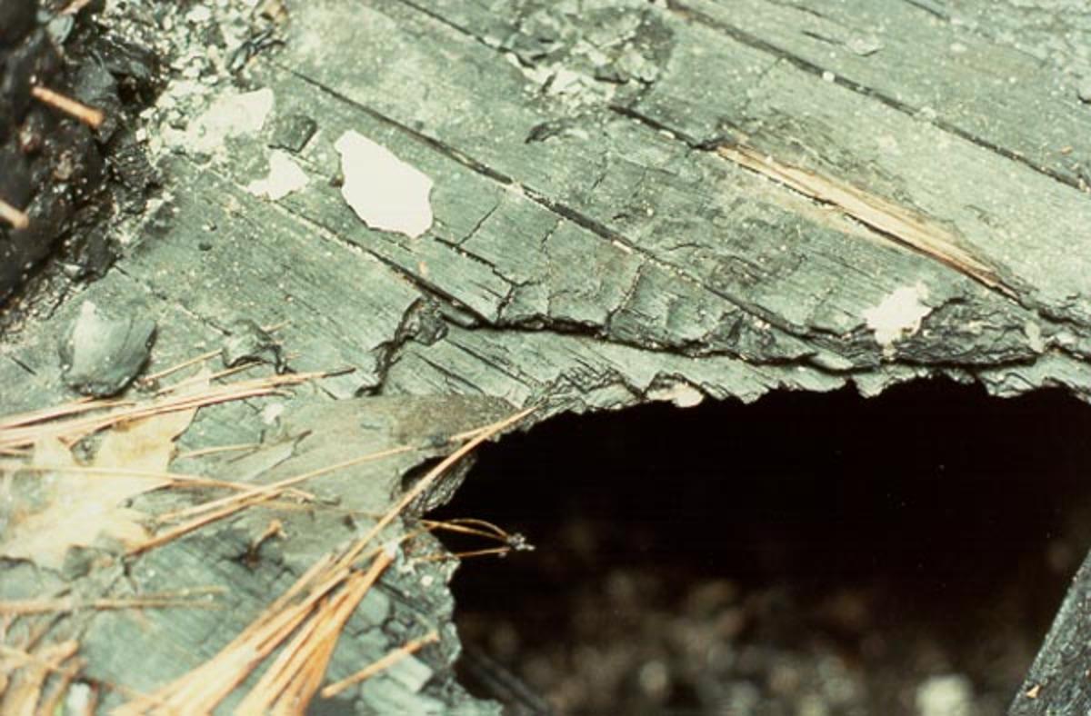 Τον κατάπιε η τρύπα που άνοιξε ξαφνικά στο σπίτι του!   Newsit.gr