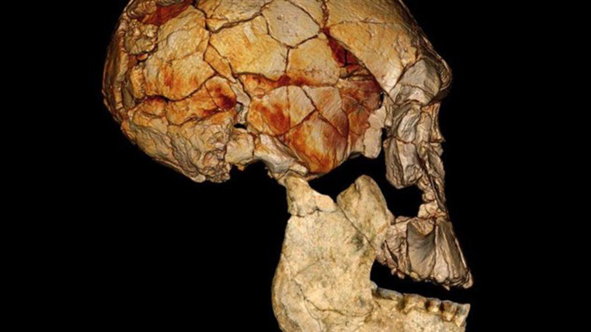 Family Tree: Βρέθηκε κι άλλος πρόγονος του ανθρώπου! | Newsit.gr