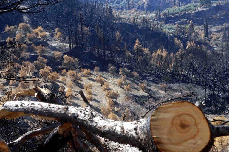Πρόγραμμα αποκατάστασης των καμένων εκτάσεων στην Ηλεία   Newsit.gr