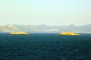 Η μάχη της τσιπούρας στα Ίμια