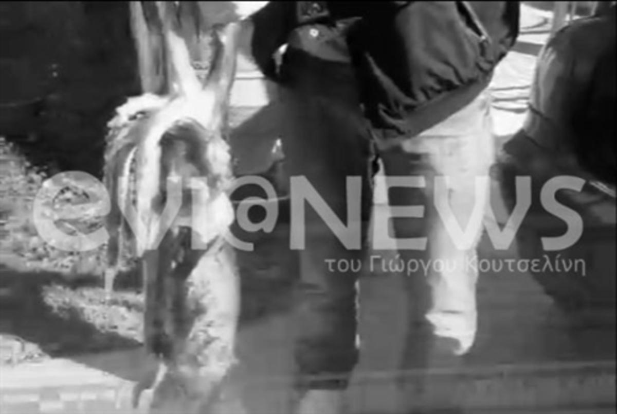 Έπιασαν καλαμάρι γίγαντα στην Εύβοια – ΦΩΤΟ και ΒΙΝΤΕΟ   Newsit.gr