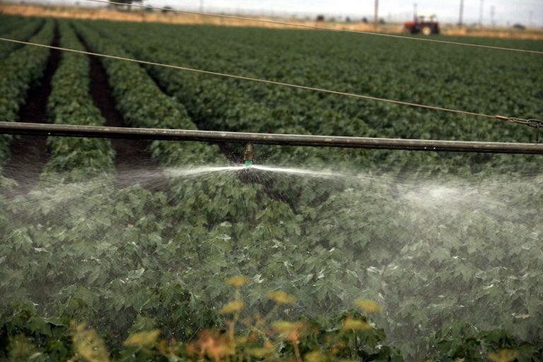 Καλλιέργειες που θα αναπτύσσονται με τη μικρότερη δυνατή ποσότητα νερού | Newsit.gr