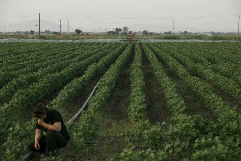 Στέλνει 30 αγρότες στον Εισαγγελέα η Μπατζελή | Newsit.gr
