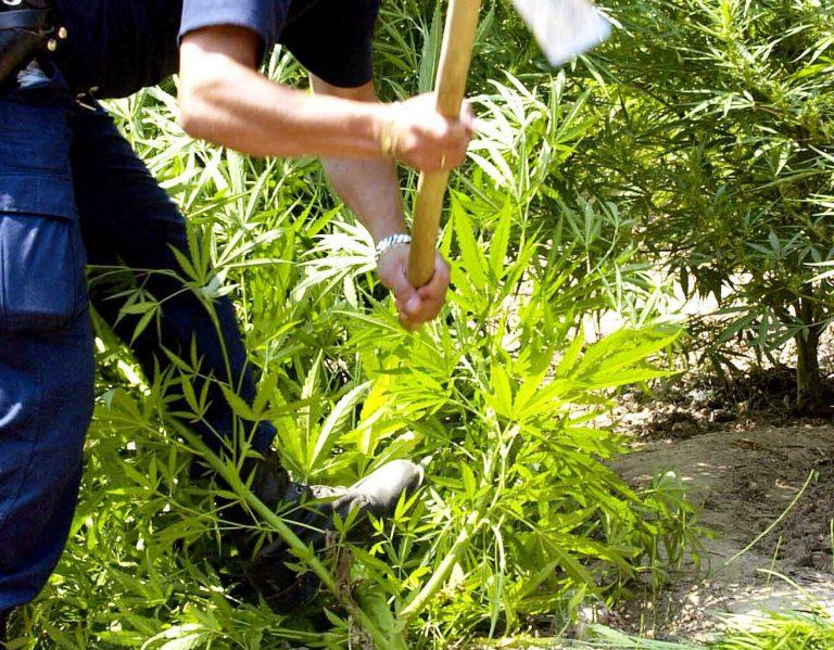 Χανιά: Καλλιεργούσε χασίς μέσα στη φυλακή! | Newsit.gr