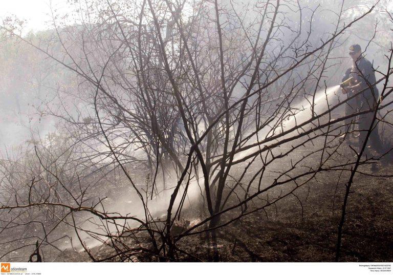 Φυσική αναγέννηση σε καμένη έκταση του Λαγκαδά   Newsit.gr