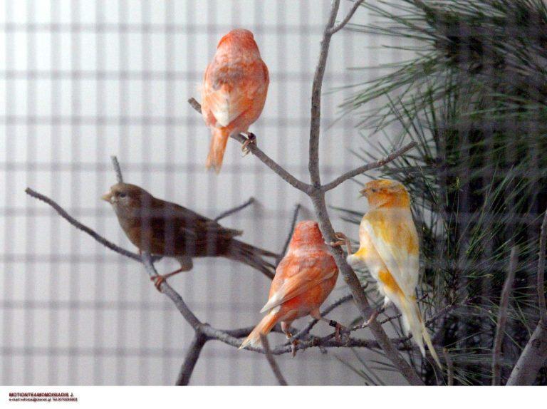 Καστοριά: Φίδι τρύπωσε σε σπίτι και έφαγε τα καναρίνια! | Newsit.gr