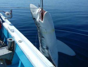 Σκόπελος: Έπιασαν καρχαρία που ζυγίζει πάνω από 300 κιλά!