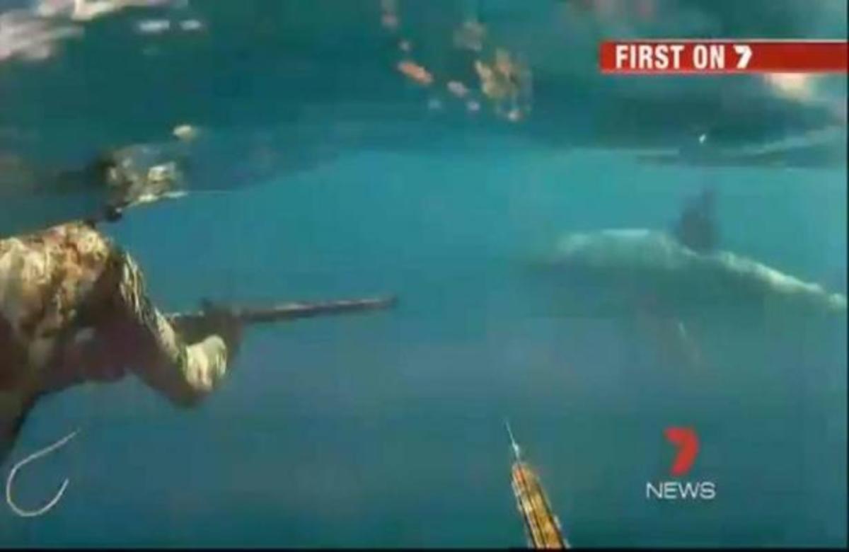 ΑΠΙΣΤΕΥΤΟ! Δυο δύτες ήρθαν σε στενή επαφή με λευκό καρχαρία | Newsit.gr
