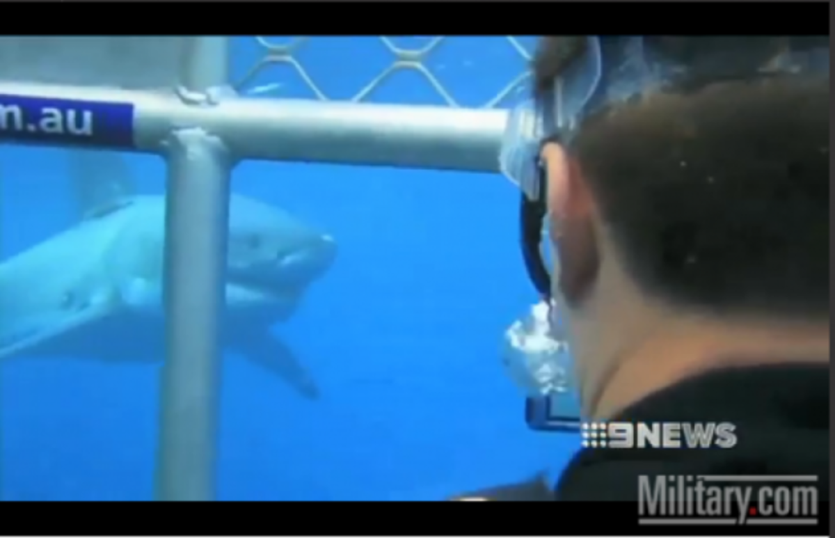 ΒΙΝΤΕΟ: Κολυμπά με καρχαρίες! Στρατιώτης που έχασε τα πόδια του στο Αφγανιστάν   Newsit.gr