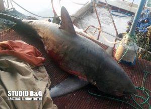 Αναστάτωση στη Νέα Κίο από καρχαρία 4 μέτρων! [pics]