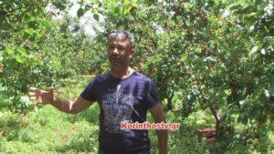 Καιρός: Μεγάλες καταστροφές σε καλλιέργειες στην Κόρινθο [vid]