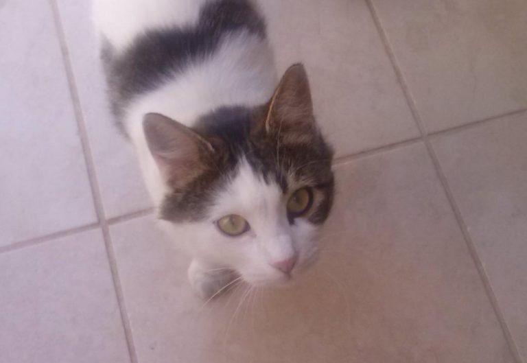 Μυτιλήνη: Οι πυροσβέστες έσωσαν τη γάτα – ΒΙΝΤΕΟ | Newsit.gr