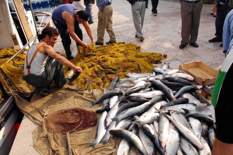 Αλεξανδρούπολη: Ψάρεψαν 4 τόνους κεφαλόπουλα! | Newsit.gr