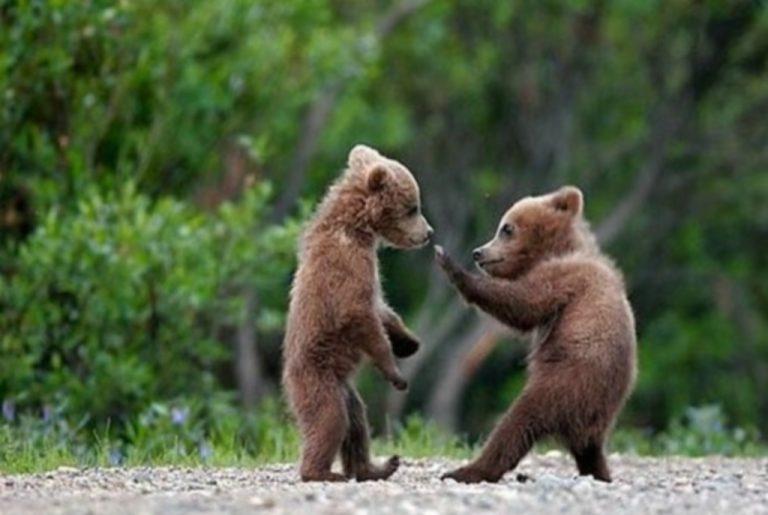 Το δικό τους νηπιαγωγείο και γηροκομείο απέκτησαν οι… αρκούδες! | Newsit.gr
