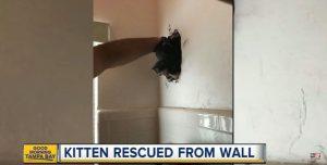 Αυτό το άτυχο γατάκι εγκλωβίστηκε στον τοίχο – Δείτε πώς το έσωσαν οι πυροσβέστες [vid]