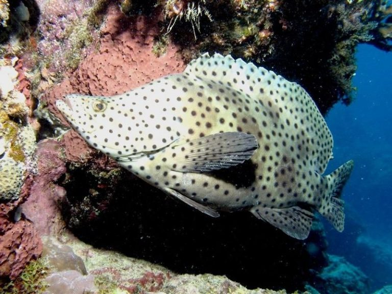 Εντοπίστηκε,   άγνωστος κοραλλιογενής ύφαλος… | Newsit.gr
