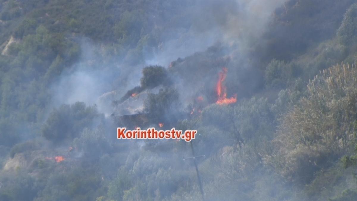 Κορινθία: Φωτιά καίει ανεξέλεγκτη σε χαράδρα [vid] | Newsit.gr