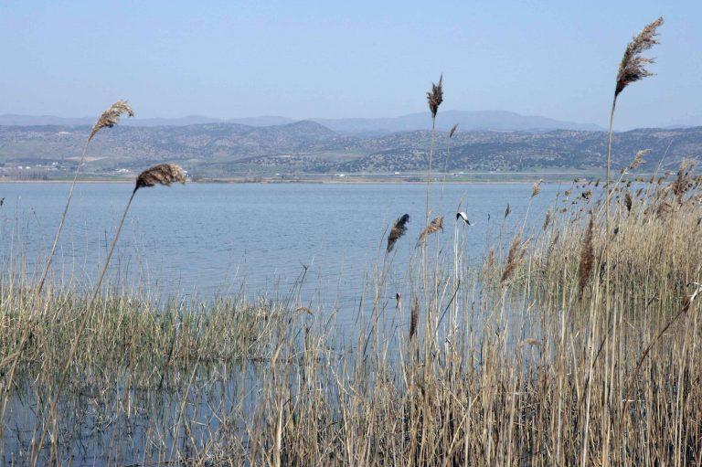 Θεσσαλονίκη: Είδε ανθρώπινα μέλη να επιπλέουν στη λίμνη | Newsit.gr