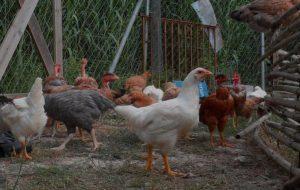 Ήπειρος: Παίρνουν μέτρα για τη γρίπη των πτηνών