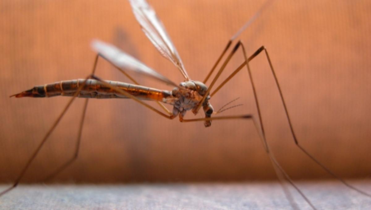 Στο πόδι για τα θανατηφόρα κουνούπια! – Έκτακτες συσκέψεις για νέα μέτρα | Newsit.gr
