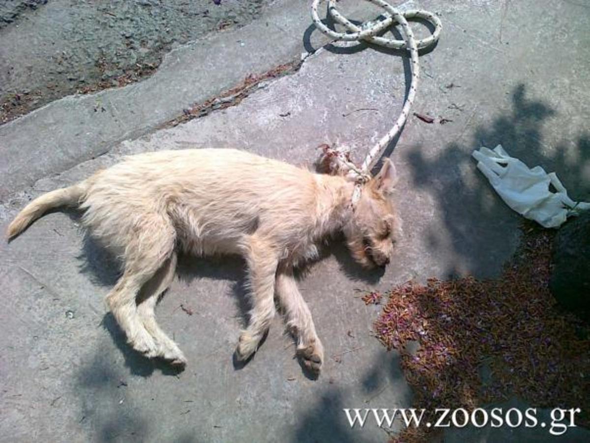 Βόλος: Βασάνισε και κρέμασε κουτάβι! | Newsit.gr