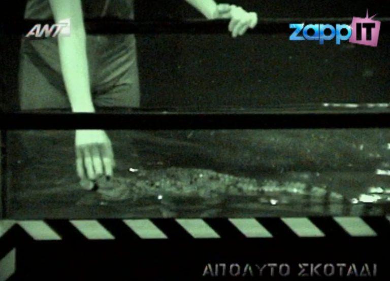Τους έβαλαν να πιάσουν κροκόδειλο!   Newsit.gr