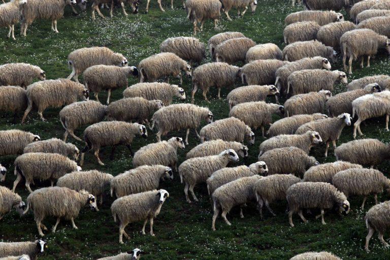 Μέτρα για την ανάπτυξη των κτηνοτρόφων | Newsit.gr