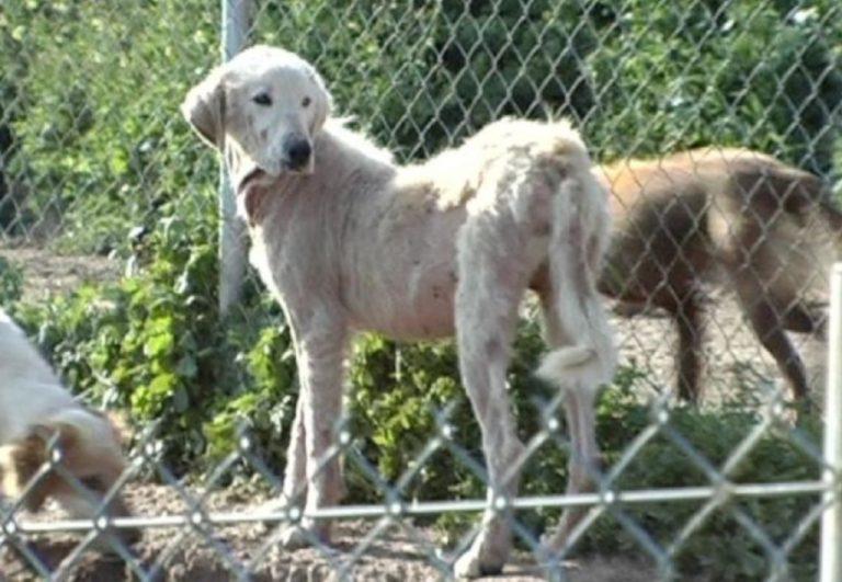 Σοκαριστικές εικόνες από το κυνοκομείο της Λαμίας – Δεκάδες άρρωστα, φαγωμένα και εξαφανισμένα σκυλιά | Newsit.gr
