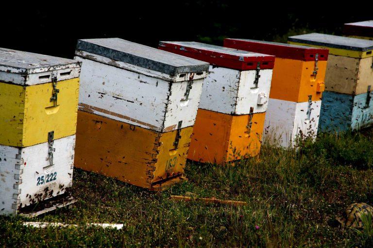 Ηράκλειο: Του έκλεψαν… τις μέλισσες! | Newsit.gr