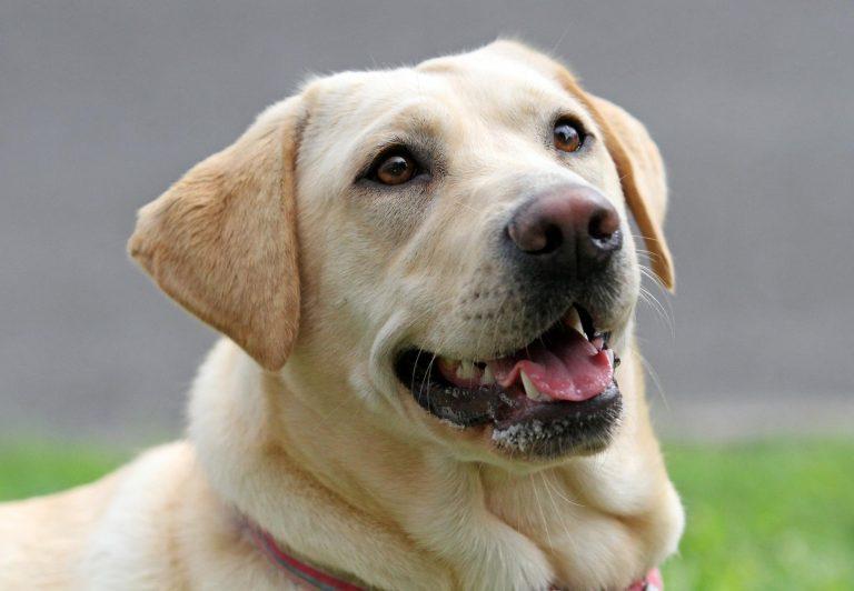 Γέννησε παρέα με τον σκύλο της | Newsit.gr