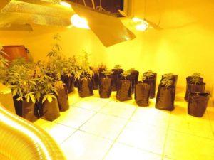 Λάρισα: Είχαν φτιάξει ολόκληρο θερμοκήπιο για χασίς [pics]