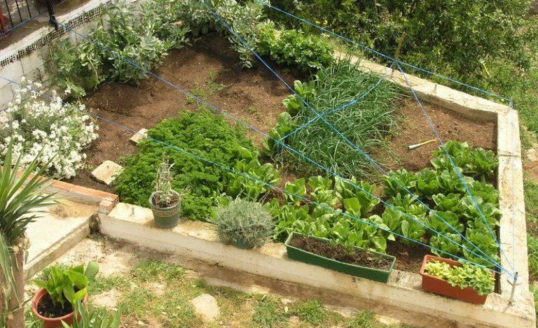 Απέτυχε να μπει στο σπίτι και έκλεψε τον κήπο! | Newsit.gr