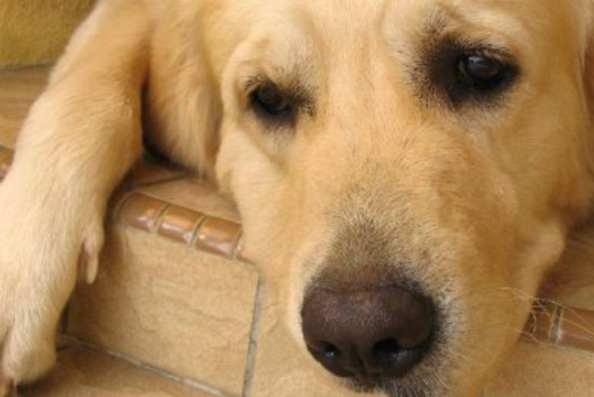 Λευκάδα: Κρέμασαν άτυχο σκυλάκι… | Newsit.gr